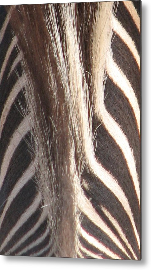 Metal Print featuring the photograph Zebra Mane by Mary Ivy