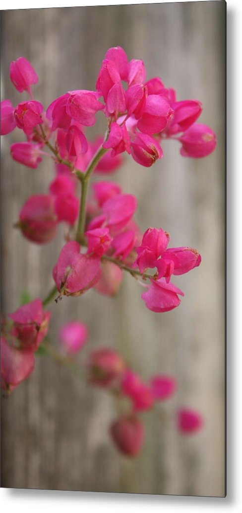 Flowers Metal Print featuring the photograph Beyond Words by Kenneth Cykala