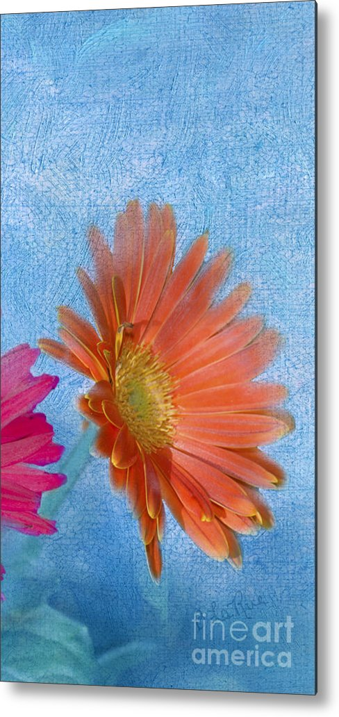 Triptych Metal Print featuring the photograph Triptych Gerbera Daisies-three by Betty LaRue