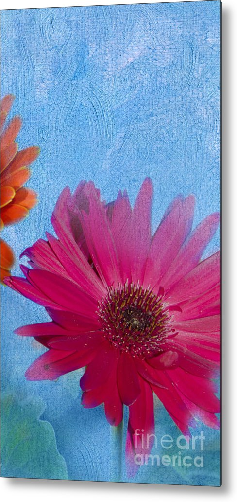 Triptych Metal Print featuring the photograph Triptych Gerbera Daisies-two by Betty LaRue