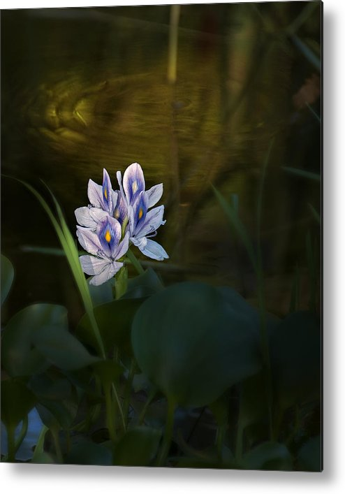 Flowers Metal Print featuring the photograph ... by Mario Celzner