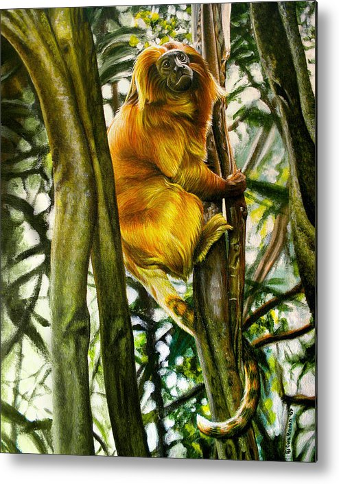 Tamarin Metal Print featuring the painting Gold Mane by Cara Bevan