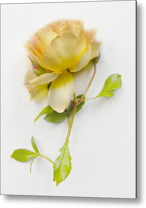 Flower Metal Print featuring the photograph 3672 by Peter Holme III