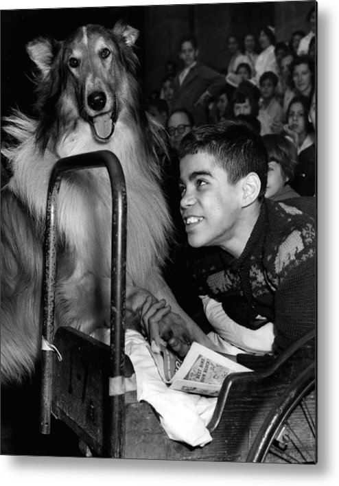 classic Metal Print featuring the photograph Lassie by Retro Images Archive