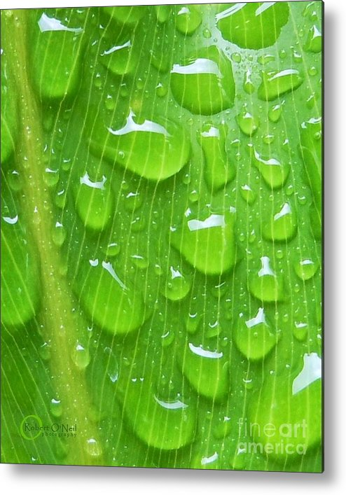 Plant Metal Print featuring the photograph A Cleansing Morning Rain by Robert ONeil