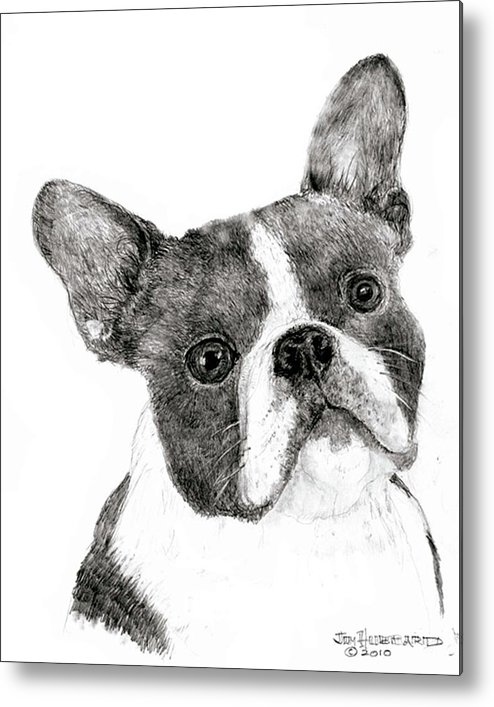Boston Terrier Metal Print featuring the drawing Boston Terrier by Jim Hubbard