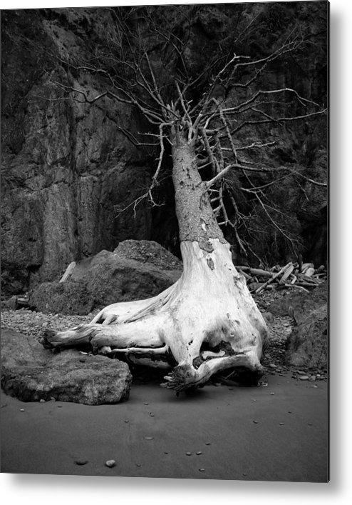 2013 Metal Print featuring the photograph Driftwood Tree - Kalaloch Beach - Washington - July 2013 by Steve G Bisig