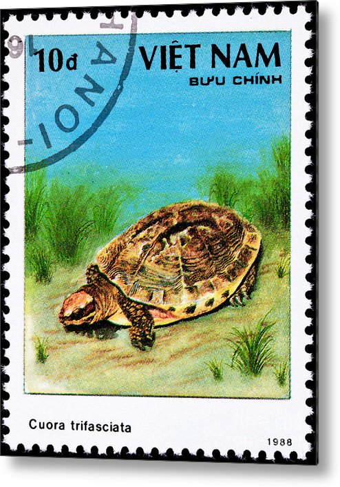 Photograph Metal Print featuring the photograph Golden Coin Turtle Cuora Trifa by Jim Pruitt