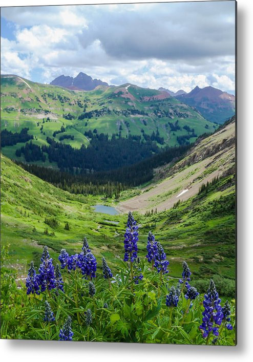 Valley Metal Print featuring the photograph Lupine Over Valley by Kevin Buffington