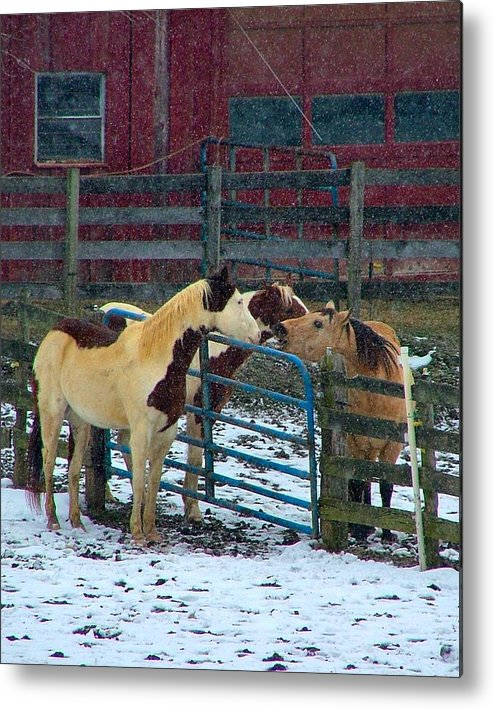 Horses Metal Print featuring the photograph Meeting Of The Equine Minds by Julie Dant