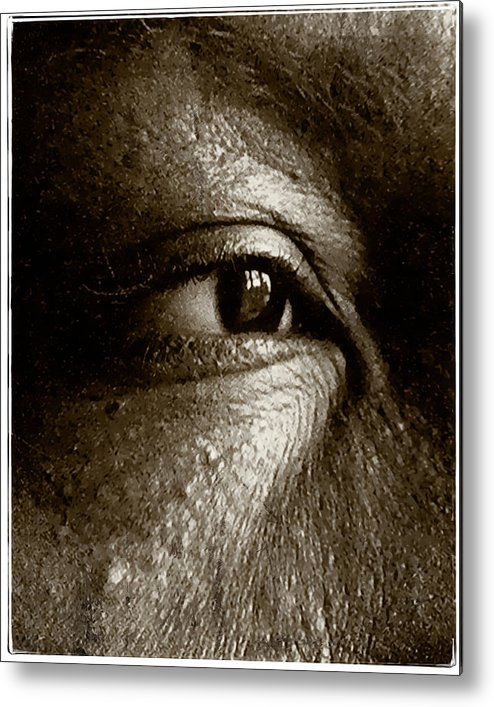 Eye Metal Print featuring the photograph Nora On West Palace by Terry Fiala