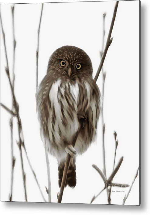 Northern Pygmy Owl Metal Print featuring the painting Northern Pygmy Owl - Little One by Beve Brown-Clark Photography