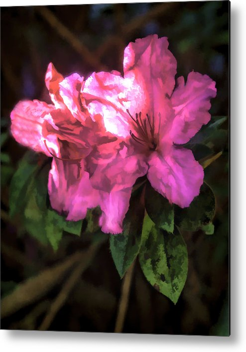 Flower Metal Print featuring the photograph Pink Azalea 3 by Michael Schwartzberg