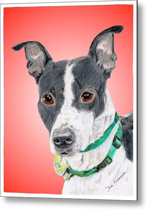 Dog Metal Print featuring the drawing Princess - A Former Shelter Sweetie by Dave Anderson