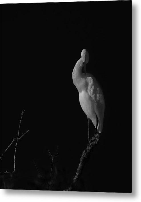 Black And White Metal Print featuring the photograph shy by Mario Celzner