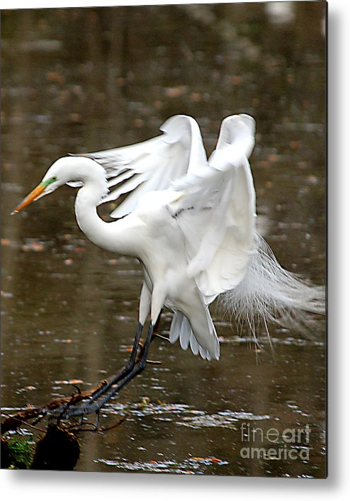 Birds Metal Print featuring the photograph Soft Landing by Irene Dowdy