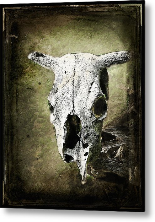 Cow Skull South West Old West Metal Print featuring the photograph South West Scull by Jeane Shaw