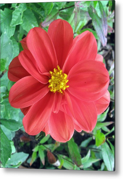 Flower Metal Print featuring the photograph Spot On by James McIntire