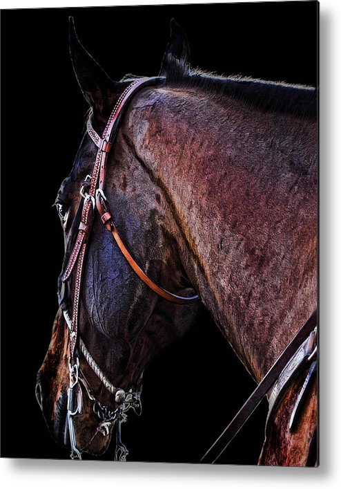 Horse Metal Print featuring the photograph Stallion by Camille Lopez