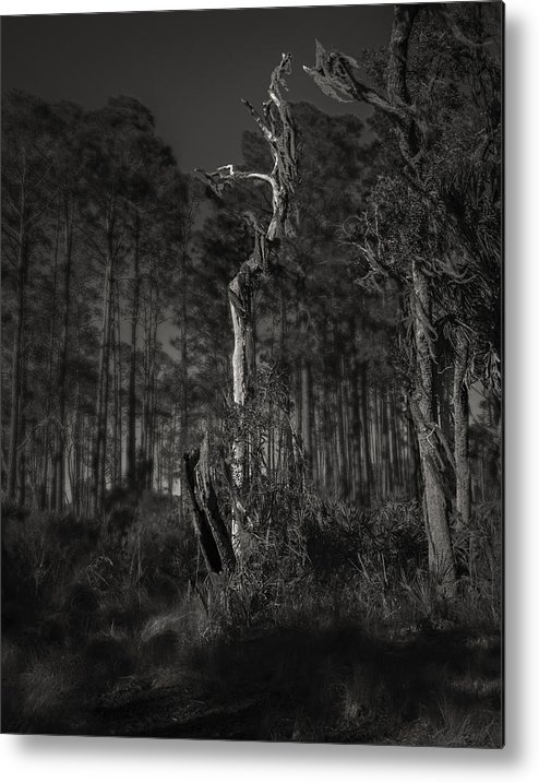 Black And White Metal Print featuring the photograph Still Standing by Mario Celzner