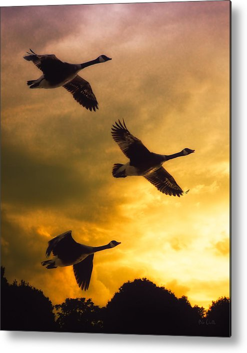 Geese Metal Print featuring the photograph The Journey South by Bob Orsillo