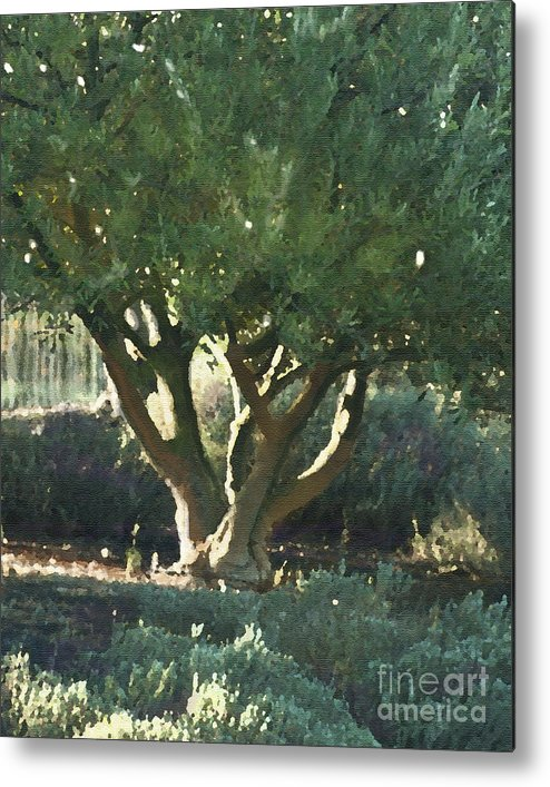 Corde Valle San Martin Ca Metal Print featuring the painting Vineyard Olive by Artist and Photographer Laura Wrede