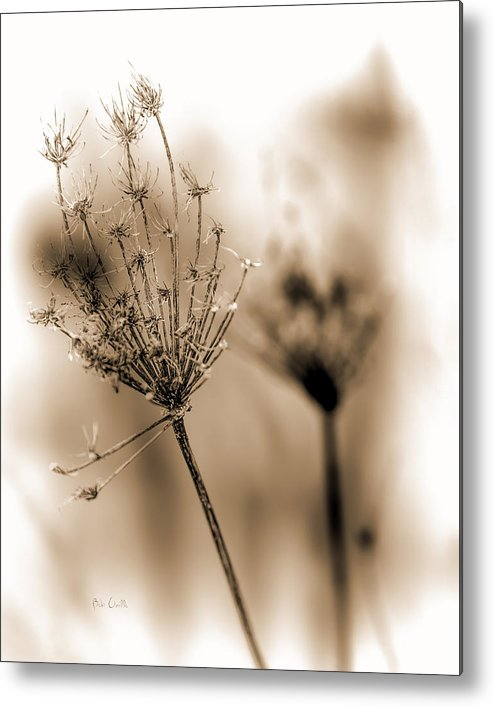 Flowers Metal Print featuring the photograph Winter Flowers II by Bob Orsillo