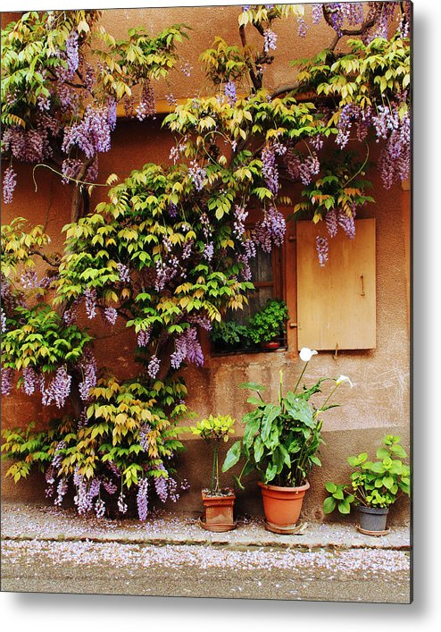 Wisteria Metal Print featuring the photograph Wisteria On Home In Zellenberg 4 by Greg Matchick
