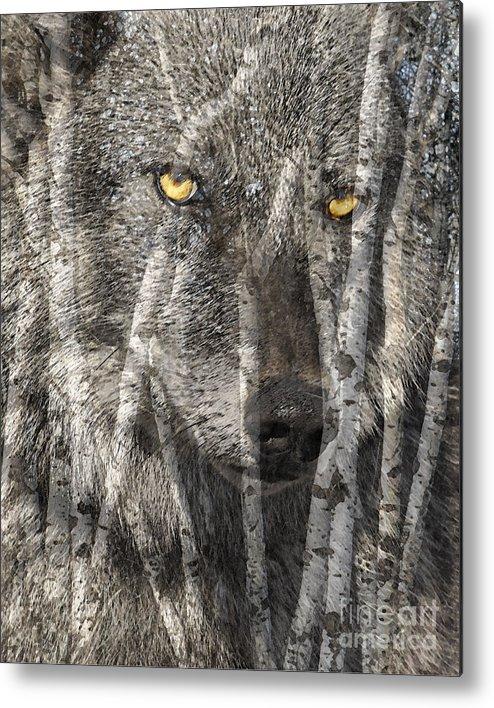 Wolf Aspens Metal Print