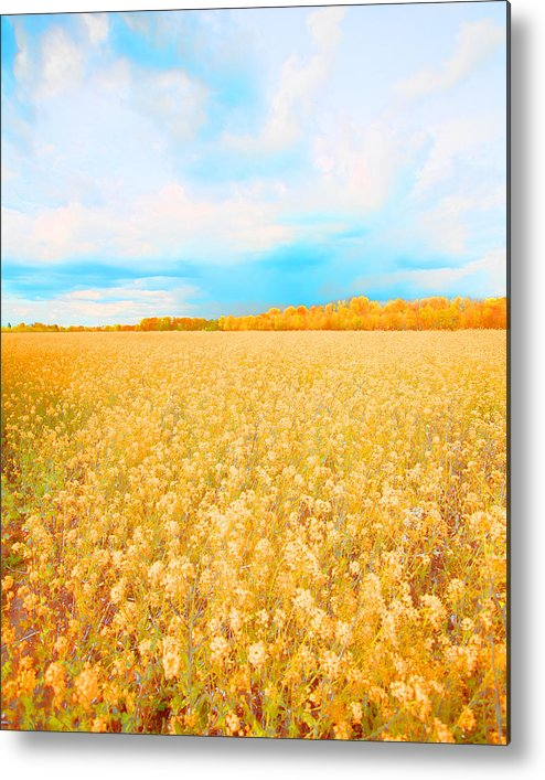 Rural Photo Metal Print featuring the photograph On A Clear Day by Bonnie Bruno