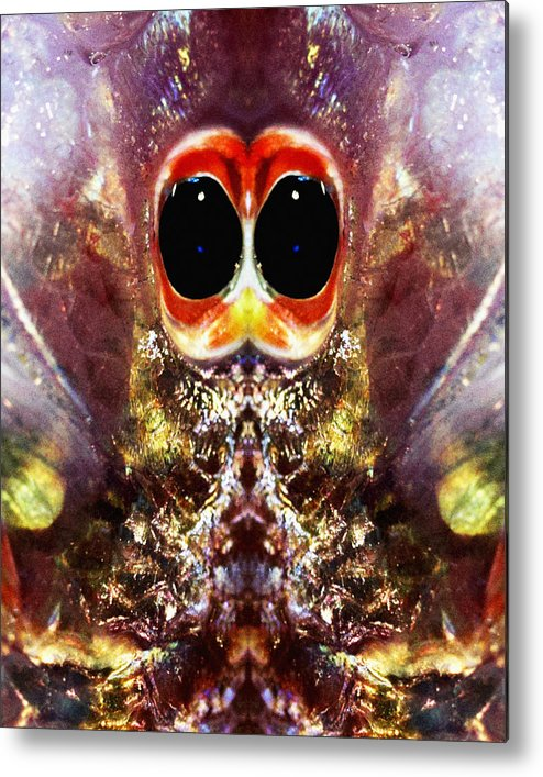 Abstract Metal Print featuring the photograph Bug Eyes by Skip Nall