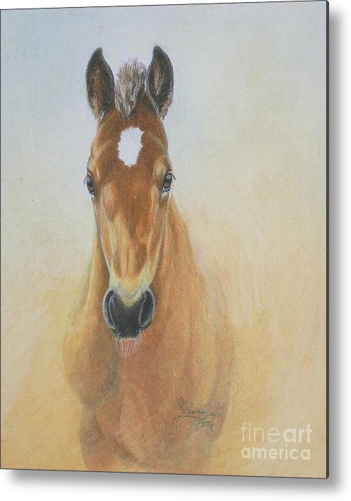 Colored Pencil Metal Print featuring the drawing Foal Study by Carrie L Lewis