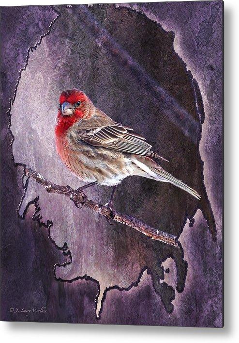 J Larry Walker Metal Print featuring the digital art House Finch Looking At Me by J Larry Walker