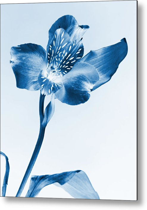 Fine Art Metal Print featuring the photograph Monochrome Flower by M K Miller