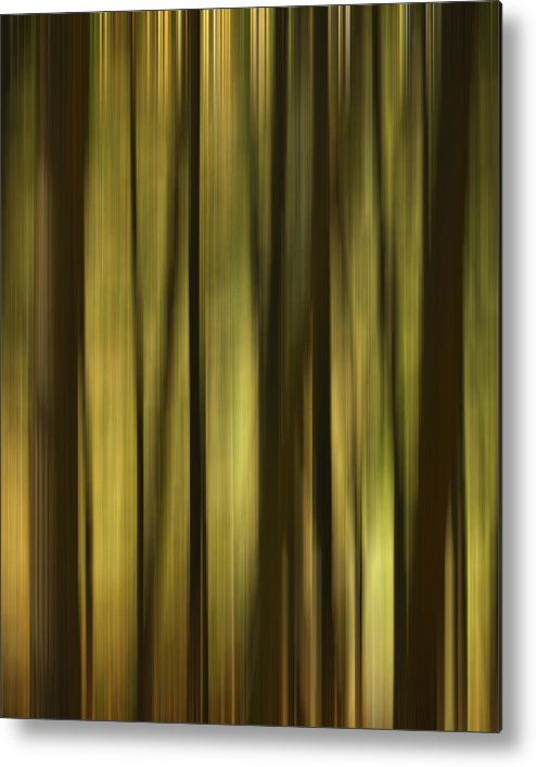 Mohawk Trail Metal Print featuring the photograph The Forest by Peggie Strachan