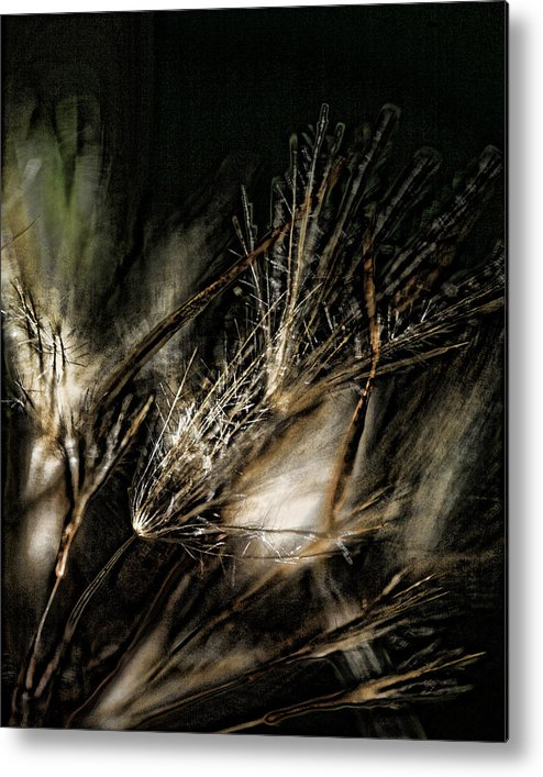 Wild Grasses Metal Print featuring the photograph Wild Grasses by Bonnie Bruno