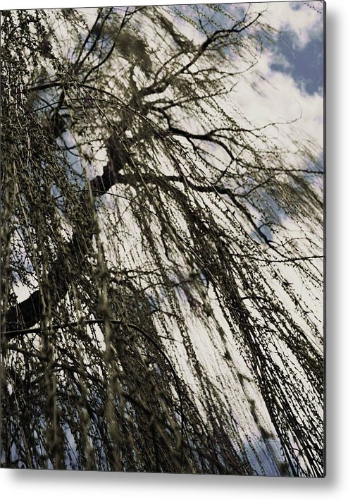 Willow Tree Metal Print featuring the photograph Willow Tree by Todd Sherlock
