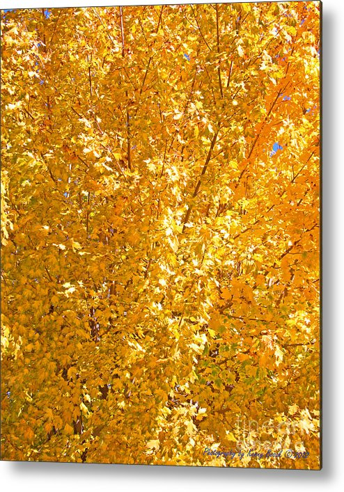 Maple Metal Print featuring the photograph Yellow Tree Leaves by Kenny Bosak