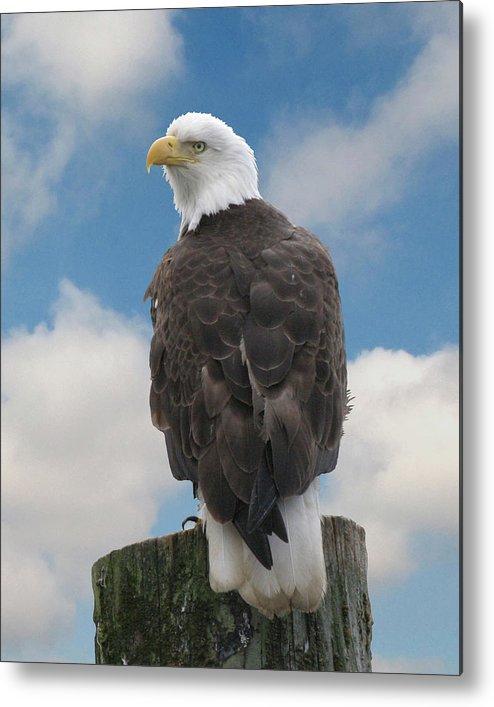 Bird Metal Print featuring the photograph Bald Eagle by Michael Kulakofsky
