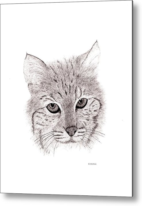 Pen And Ink Metal Print featuring the drawing Bobcat by Ed Einboden