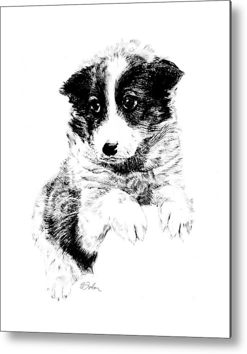 Puppy  Puppydog  Doggie  Dog  Pet Penandink  Petdog  Mutt Metal Print featuring the drawing Miss Maggie by Edward Farber