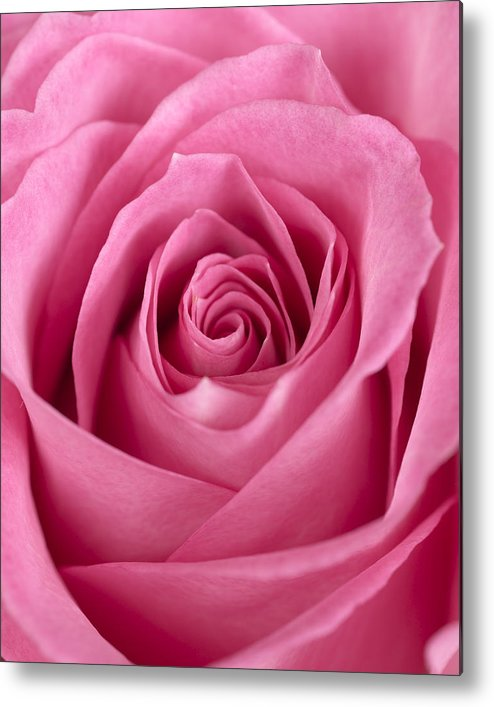 Rose Metal Print featuring the photograph Rose by Jessica Wakefield