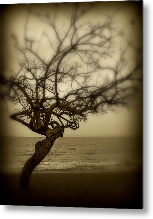 Tree Metal Print featuring the photograph Beach Tree by Perry Webster
