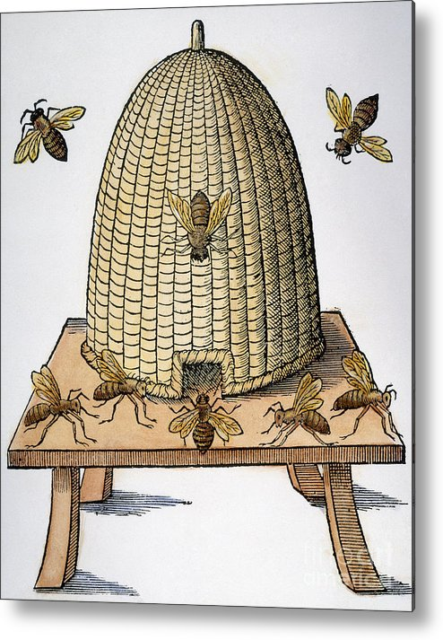 1658 Metal Print featuring the photograph Beehive, 1658 by Granger