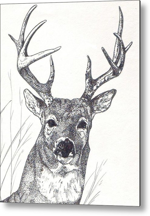 Whitetail Deer Metal Print featuring the painting Big Buck by Debra Sandstrom