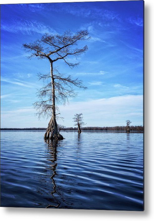 Tree Metal Print featuring the photograph Blue Cypress by Alan Raasch