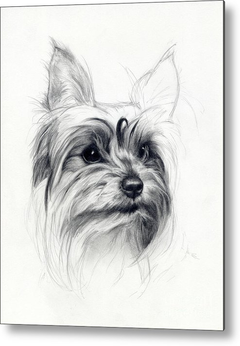 Dog Metal Print featuring the drawing Bobby by Tim Thorpe