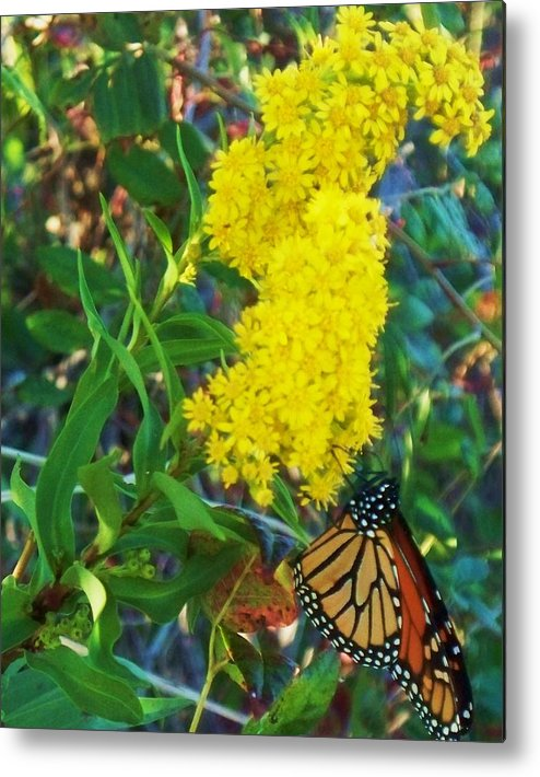 Butterfly Metal Print featuring the painting Butterfly At Cape May Nj by Eric Schiabor