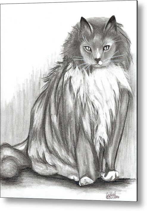 Cats Metal Print featuring the drawing Carl by Crystal Suppes