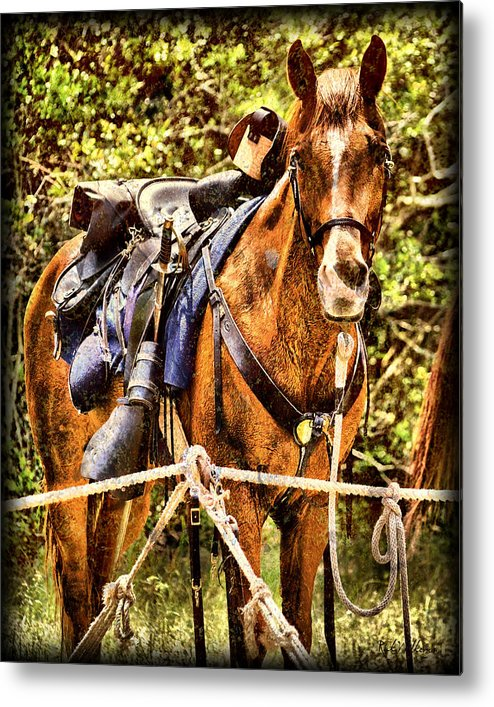 Civil War Metal Print featuring the photograph Cavalry Horse Circa 1864 by Rick Wilkerson